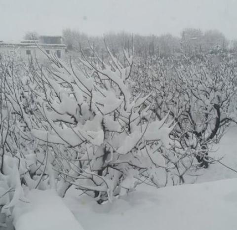 जापानमा बाक्लो हिमपातका कारण १३ जनाको मृत्यु, २५० भन्दा बढी व्यक्ति घाइते