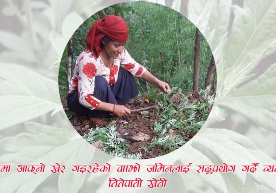 तितेपातीवाट भविश्य खोज्दै आमडाँडाकी सुनिता